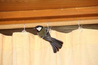 鳥さん (1).jpg