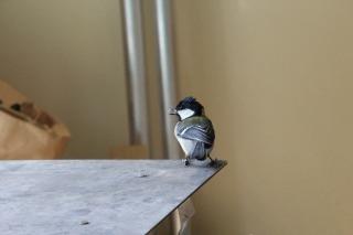鳥さん (2).jpg